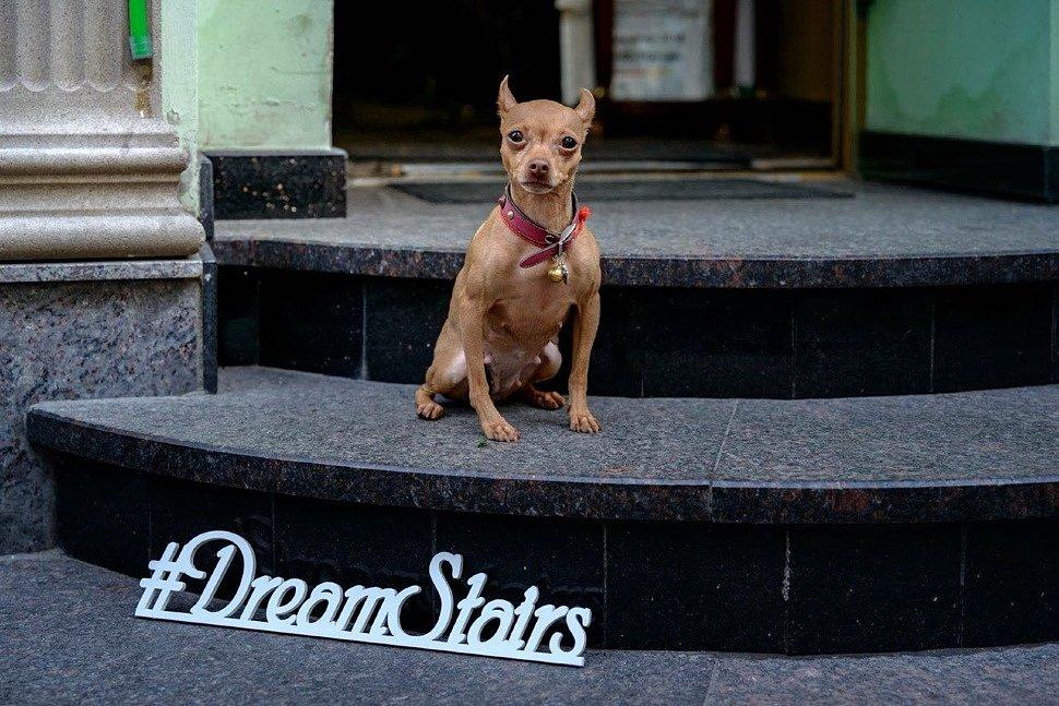 Dream Stairs - как это было